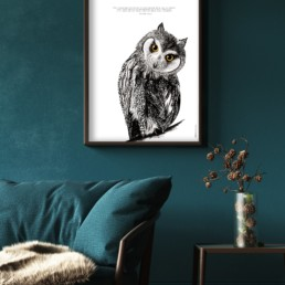 Affiche Hibou illustrant l'intuition