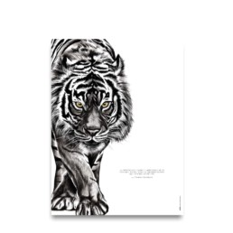 affiche Tigre - dessin de tigre - citation de Tommy Lasorda