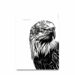 Affiche aigle - dessin portant la citation :